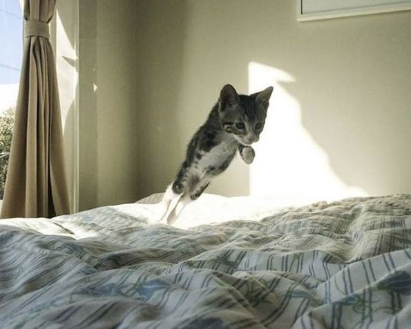 Un chat qui aime se tenir debout ! - YouTube
