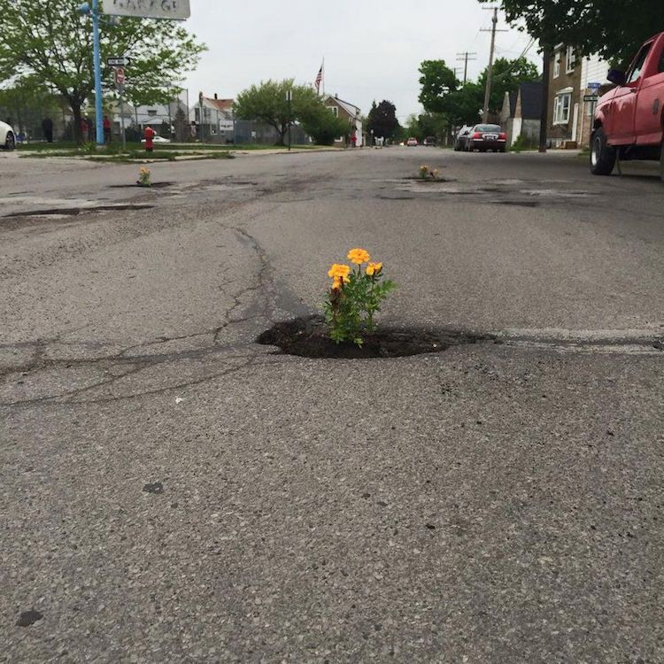 People Are Planting Flowers In Potholes Their City S Neglecting To Fix Guerrilla Gardening Protest Art Planting Flowers