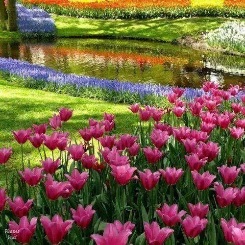 Un jardín decora un corazón Felinos Pinterest Jardín, Campos y