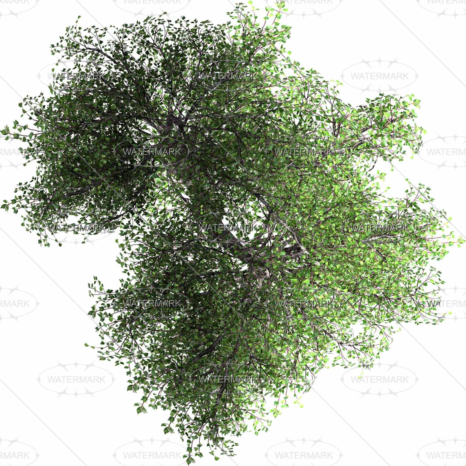 Pics For Gt Tree Top View Png Tree Photoshop Trees Top View