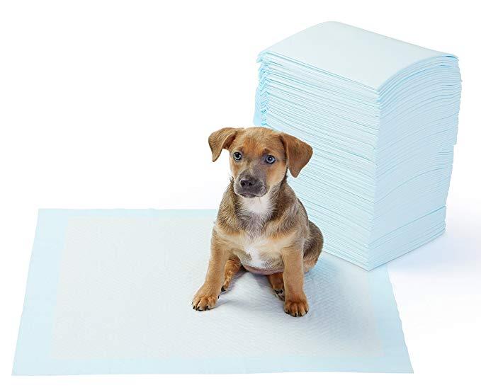 Amazon Com Amazonbasics Regular Pet Dog And Puppy Training Pads