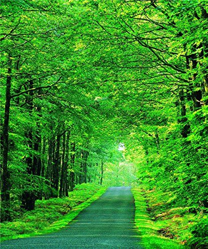 5x7ft Natural Scenic Photography Backdrops Byway Green Tr Https Www Amazon Com Nature Backgrounds Green Screen Backgrounds Beautiful Landscape Photography