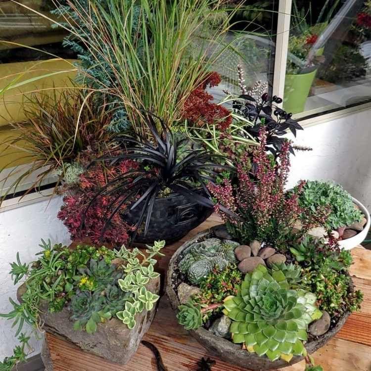 deko aus sukkulenten idee f r ein arrangement aus verschiedenen pflanzen hauswurz garten. Black Bedroom Furniture Sets. Home Design Ideas