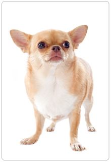 Simple Tips For Managing Your Pet S Weight Silly Animals