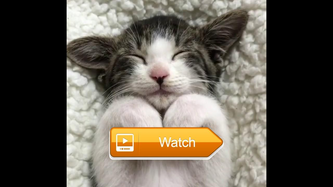 Open your ears cute cats little kittens meowing and talking