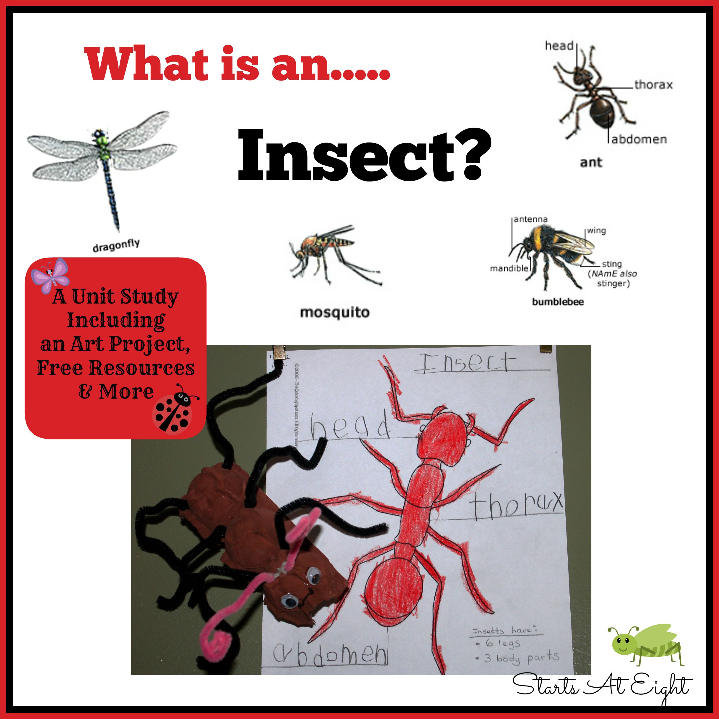 What Is An Insect   Theme - Insects   Characteristics of insects
