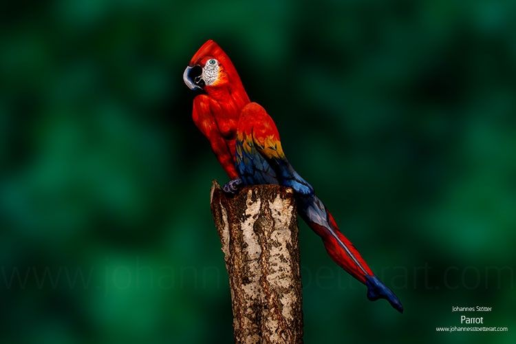 27 Amazing Body Art Illusions That Will Make You Go Wow Johannes Stoetter Parrot Woman Painting