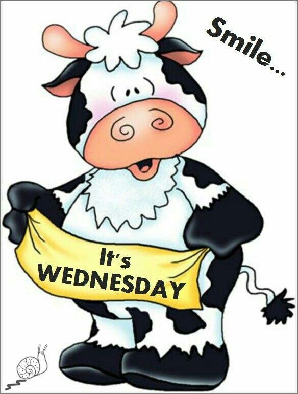 Wednesday (With images)   Cow, Cute cows, Cow art