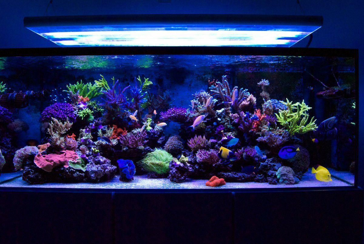 Pin By Raul Gomez Monteon On Architecture Aquarium Marine Aquarium Saltwater Aquarium
