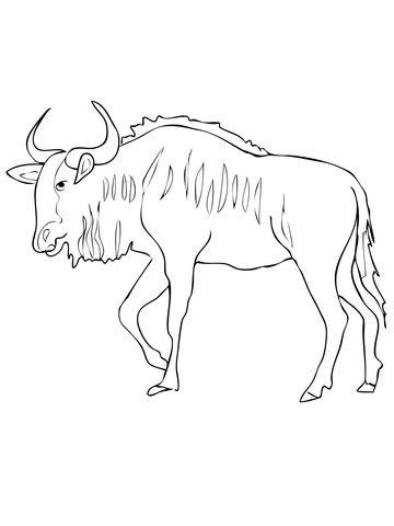 Blue Wildebeest Antelope Coloring Page Jpg 360 480 Pixels Blue