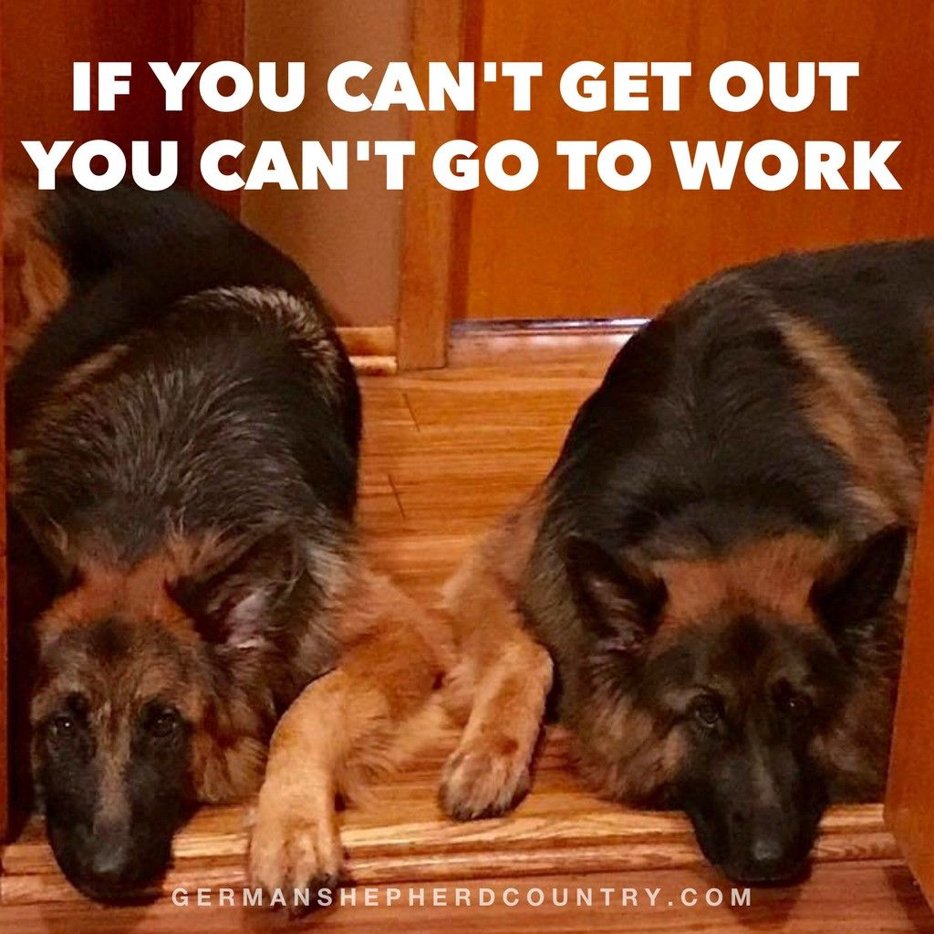 The German Shepherd Dogs Dog Quotes Funny Dog Love