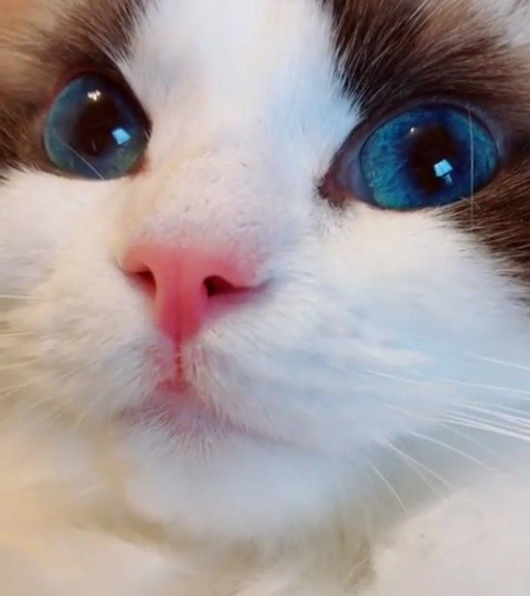 27 Gambar kucing ku terbaik di 2019