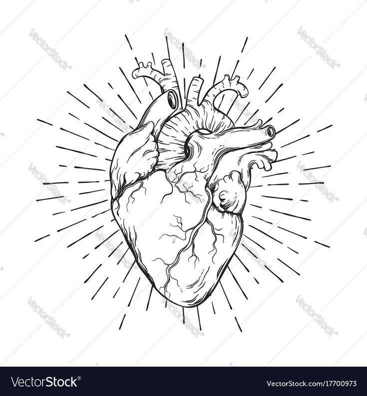 Coeur Humain Dessiné à La Main Art Tattoo Illustration