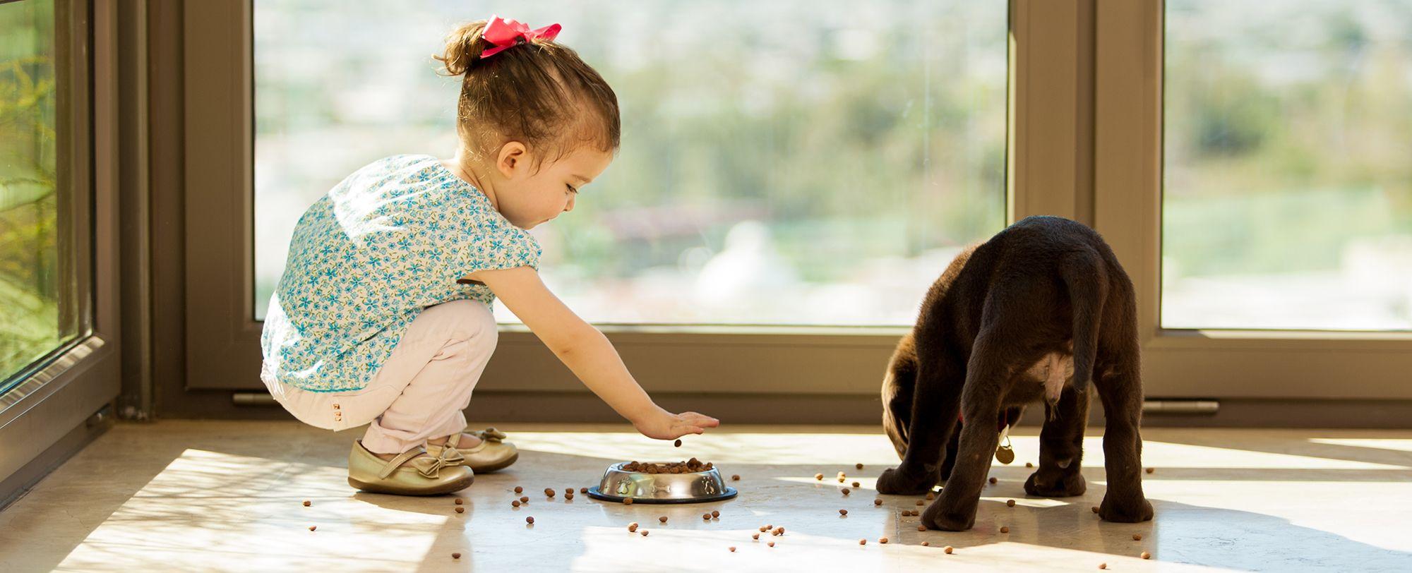 How to start feeding raw pet food instinct pet food in