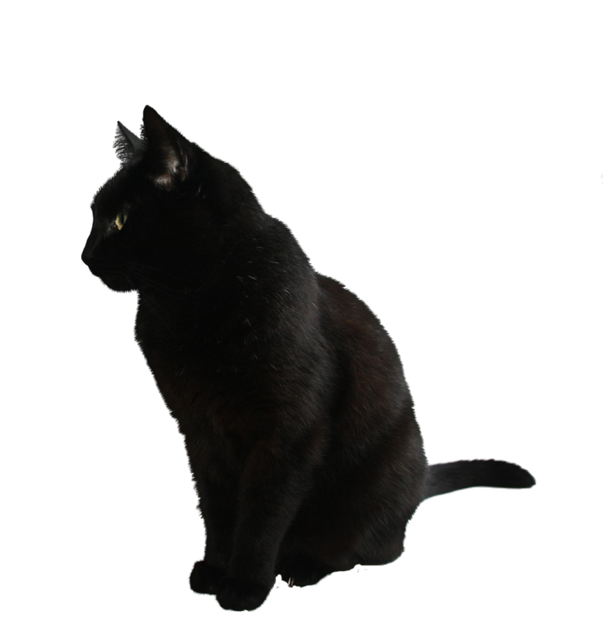 Black Cat Png By Camelfobia On Deviantart People Png Black Cat Cat Sitting