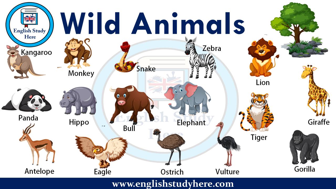 Wild Animals Names Ingilizce