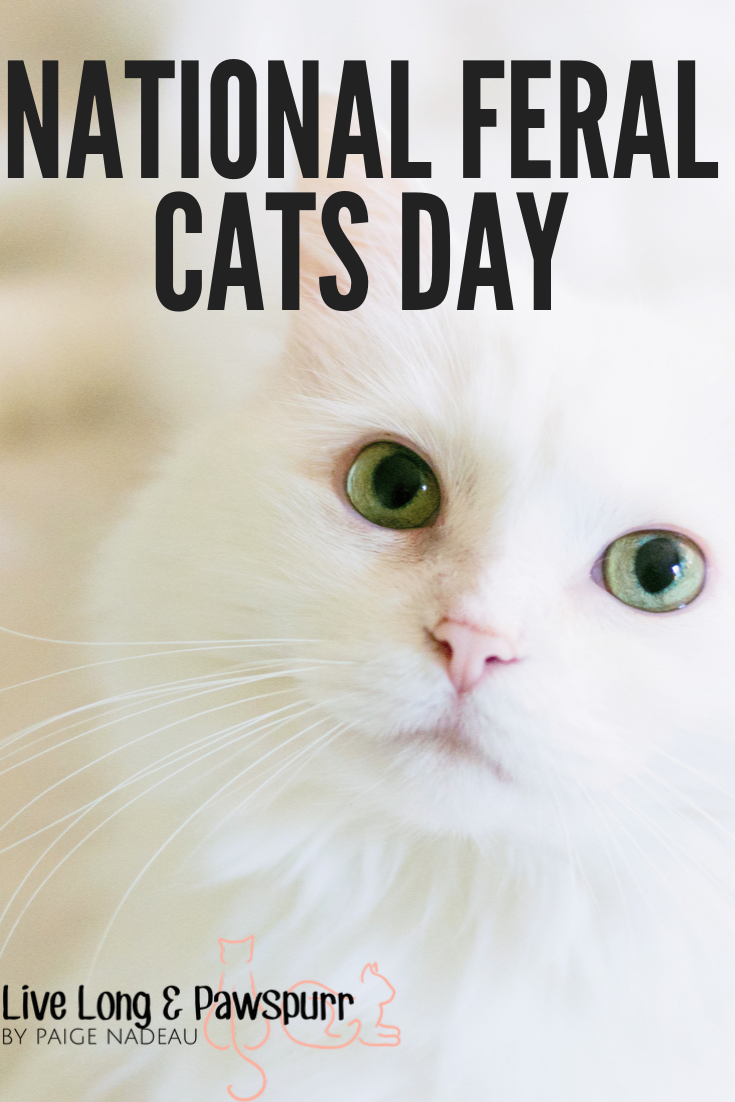 What is National Feral Cat Day Feral cats, Cat day, Cats
