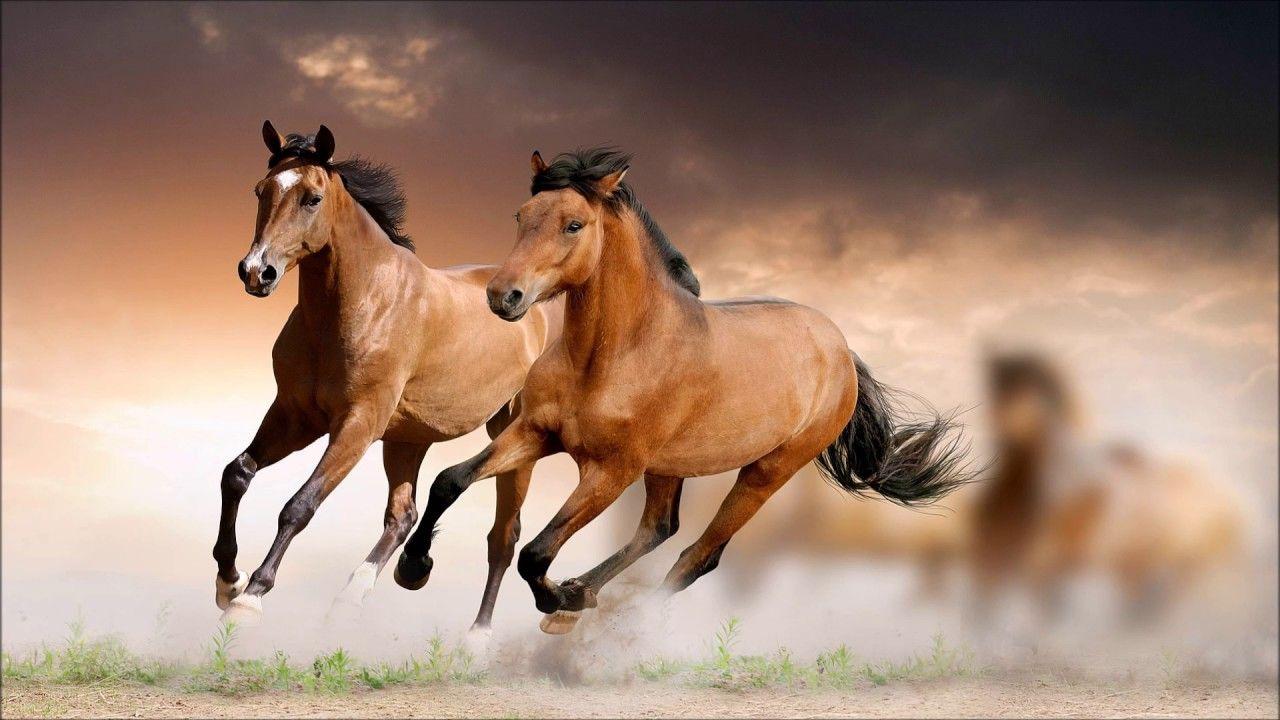 Hk Prints Horse Sticker 12x18 Inch Multicolour Horse Wallpaper White Horse Painting Horse Painting