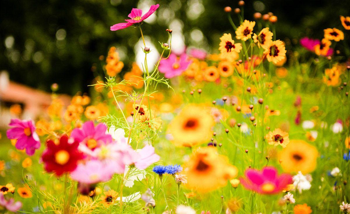 СВЕТСКА КЛЮКА Spring flowers wallpaper, Spring garden