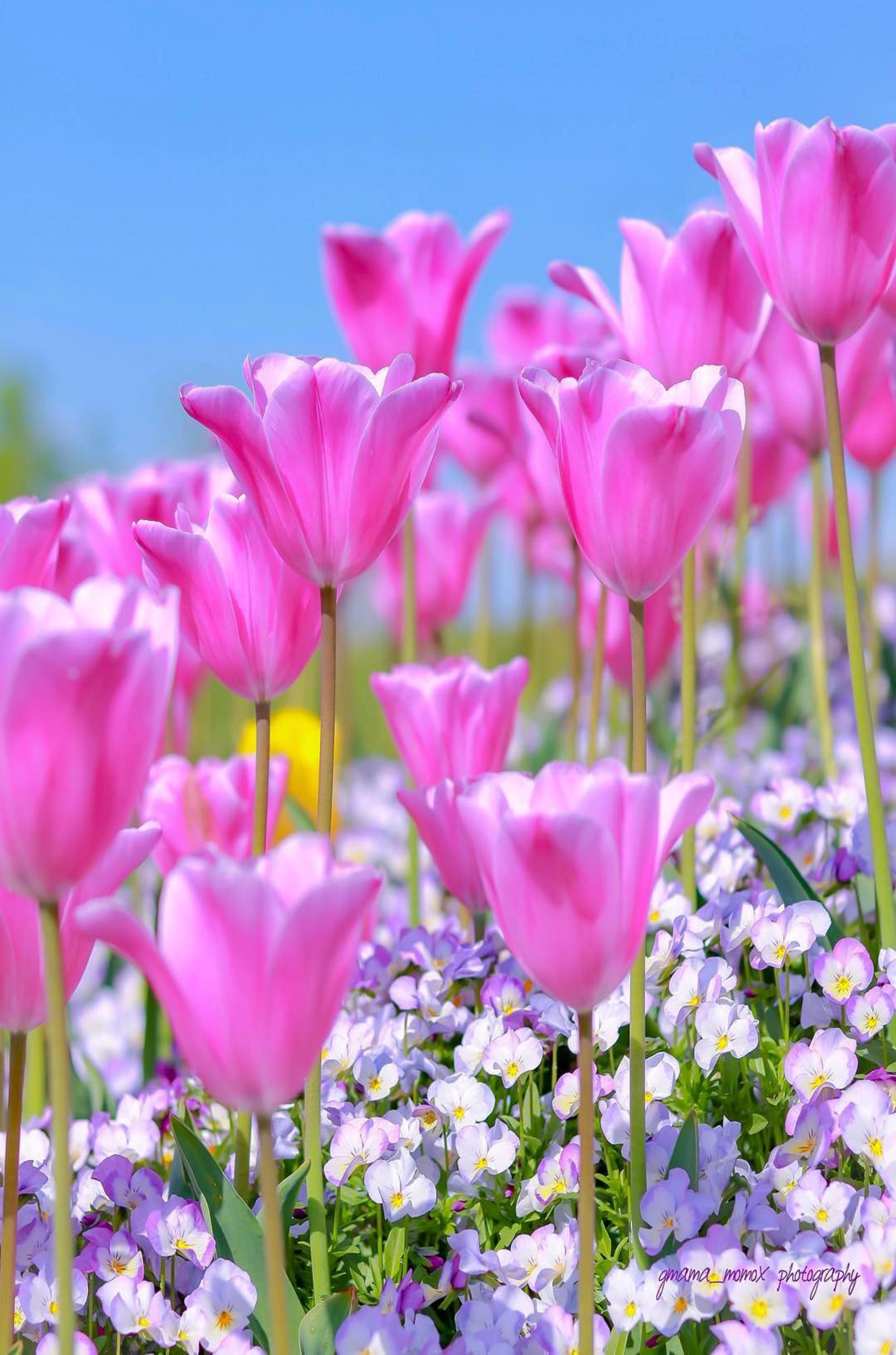 Pin by ivanka kostova on растения Flowers photography