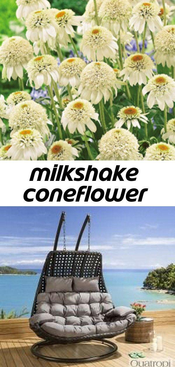 Milkshake coneflower #smallcourtyardgardens