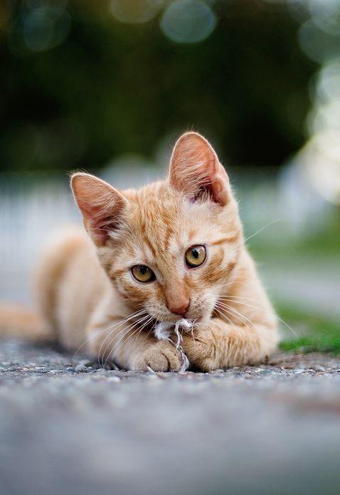 Pin Von Anna Auf Katzchen Mit Bildern Katzen