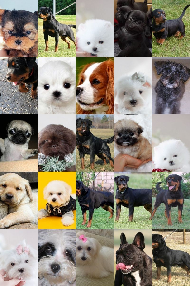 Dog-related Questions, Let Us Answer Them For You | Dog ...