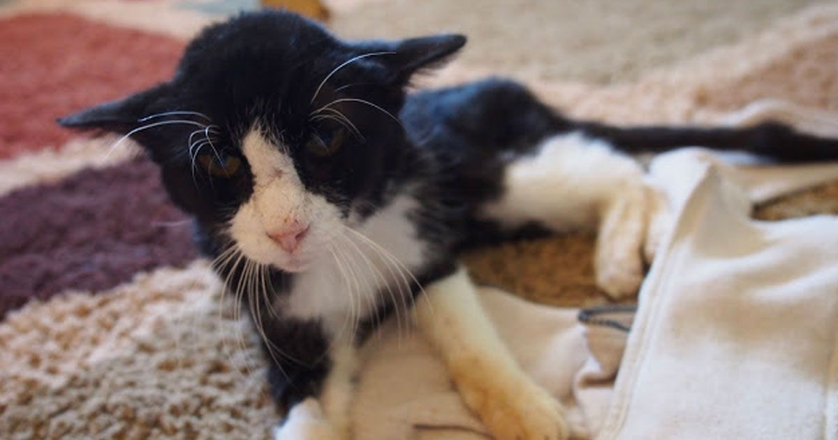 Family Adopts A Fragile 20 Year Old Cat Don T Expect How Much Joy He Has Left To Bring Old Cats Cats Cat Shelter