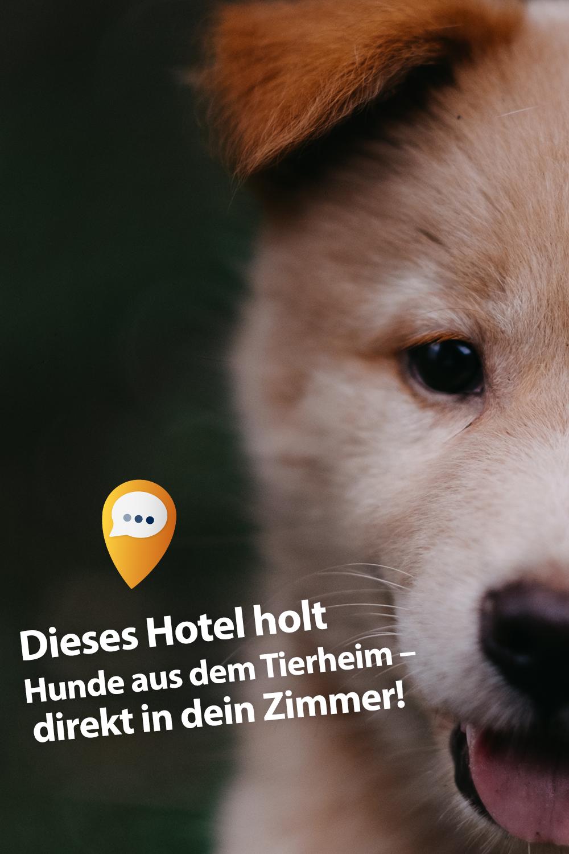 Zimmerservice de luxe Hotel bringt Sekt und Welpen