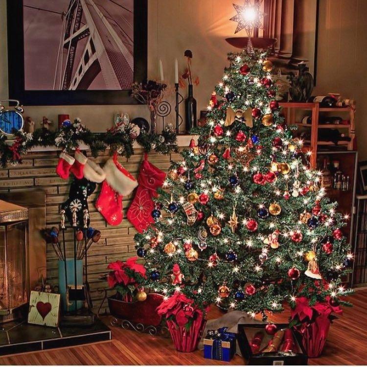 Visit Webstaqram Com To See More Instagram Photos Videos And Stories Webstaqram Christmas Chr Cool Christmas Trees Days Till Christmas Christmas Mini Shoot