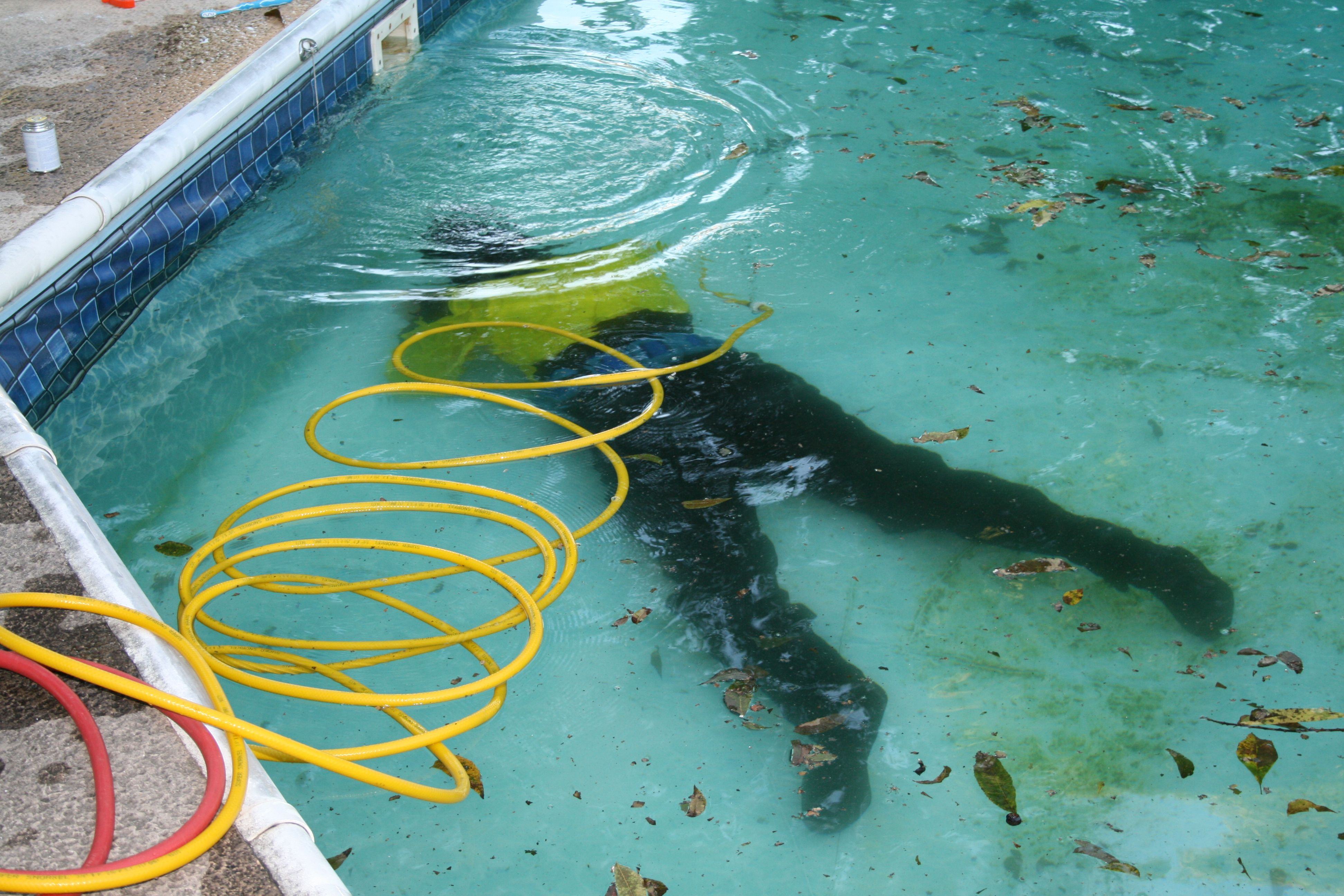 Our experts are down there working for your pool we use