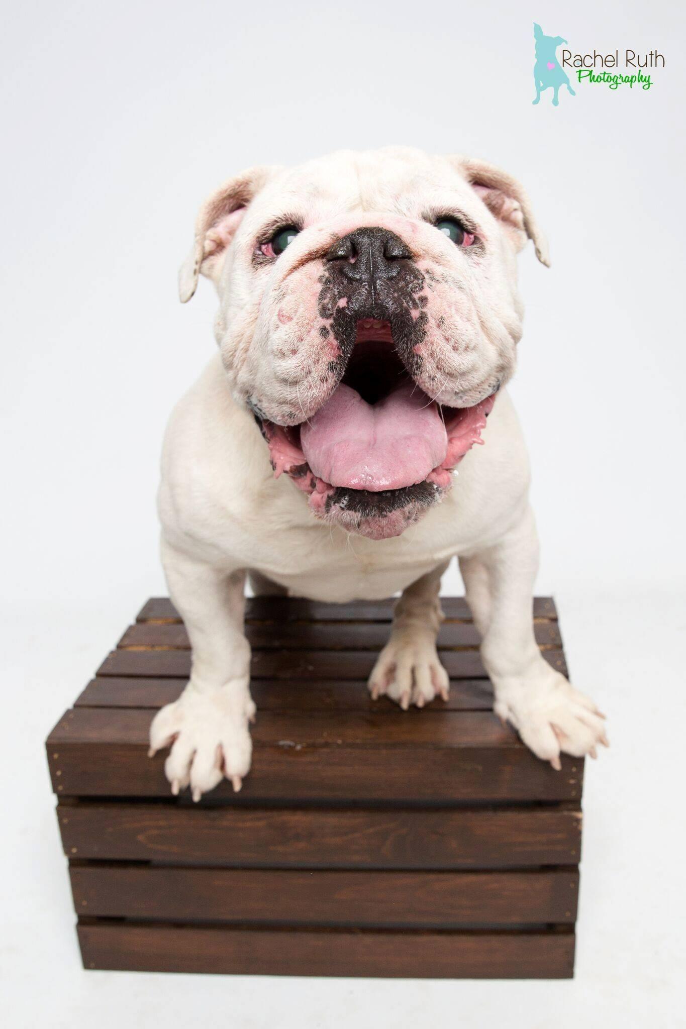Adopt Stax On Pets Needing Home In Louisiana Pinterest Pets