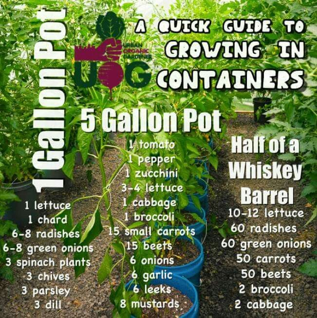 This Is A Great Guide For Container Gardening I Never Know How