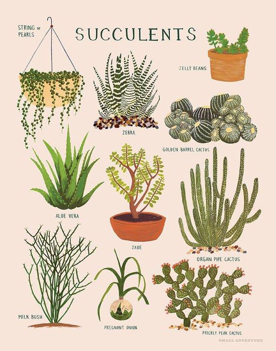 Succulents Print Succulents Plants House Plants