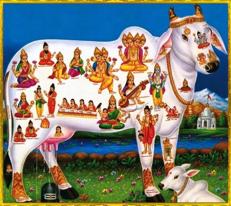 Hindu cow taboo