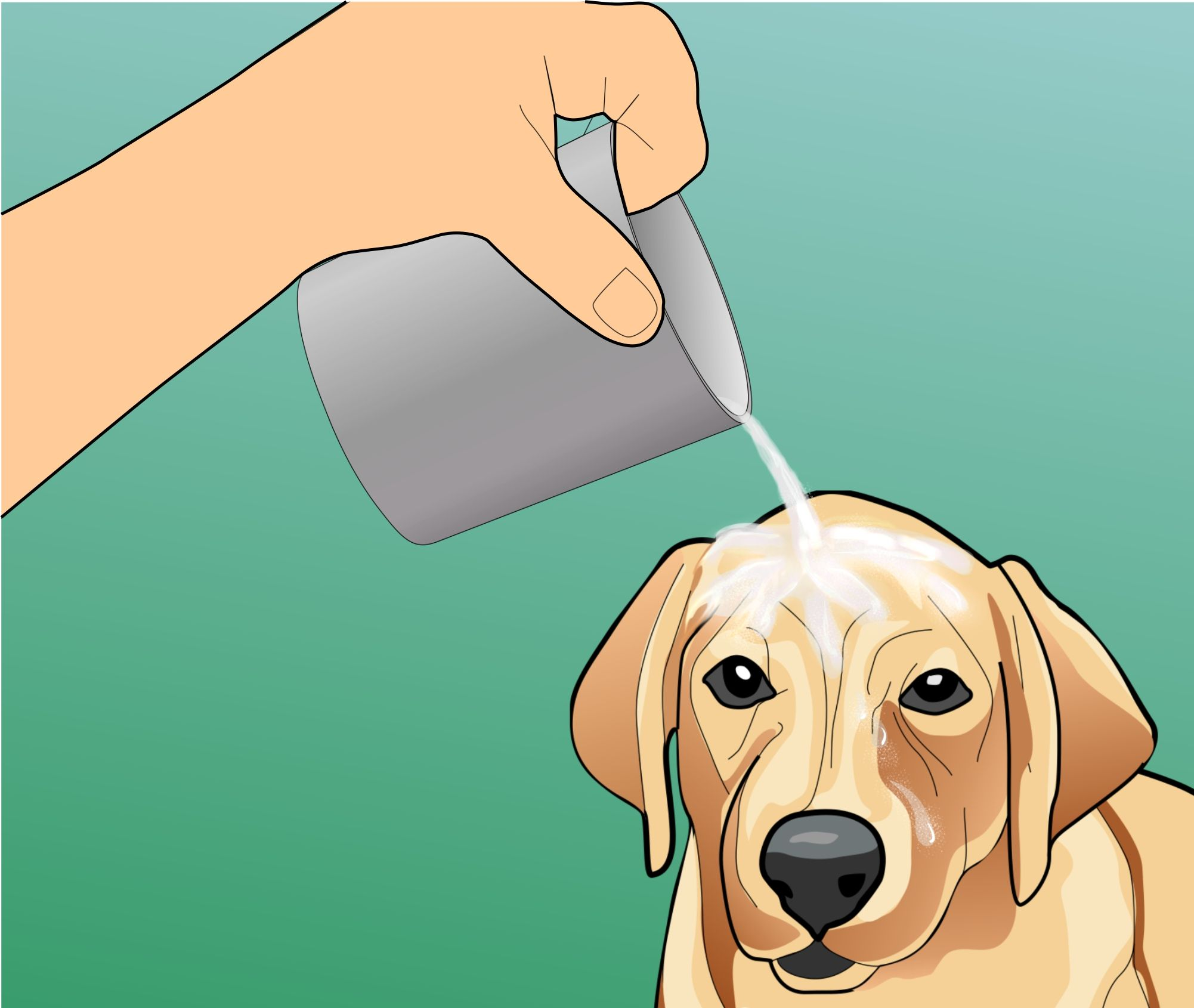 Treat Heat Stroke In Dogs Step Pour Cool Water Water Over The