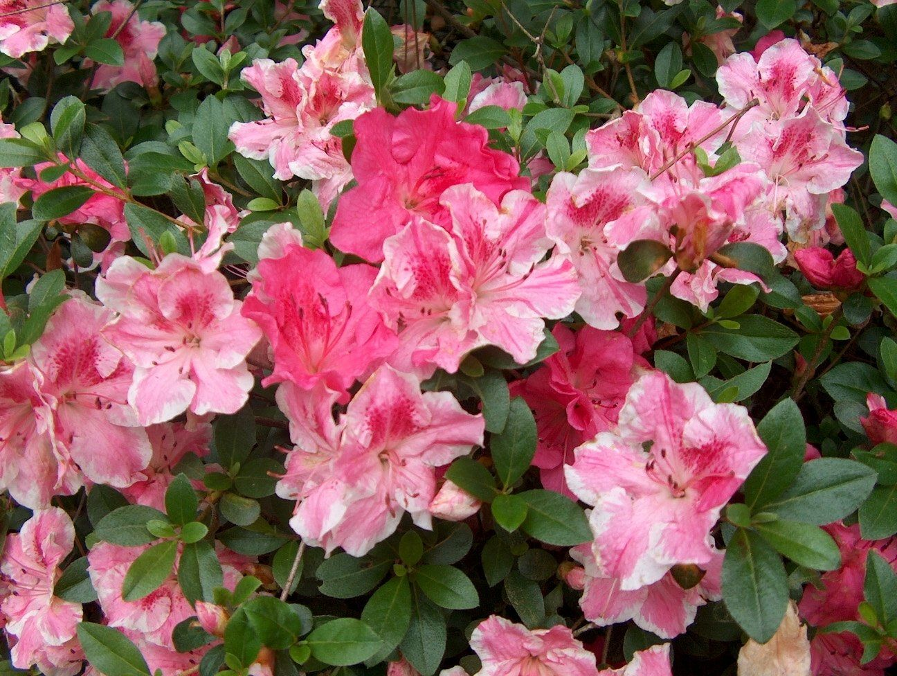 8 beautiful, hardy trees and shrubs to plant now in South
