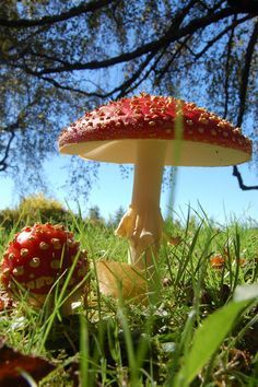 classic red and white toadstool mushroom. Has a sense of fun and playfulness to it with the bright colours.