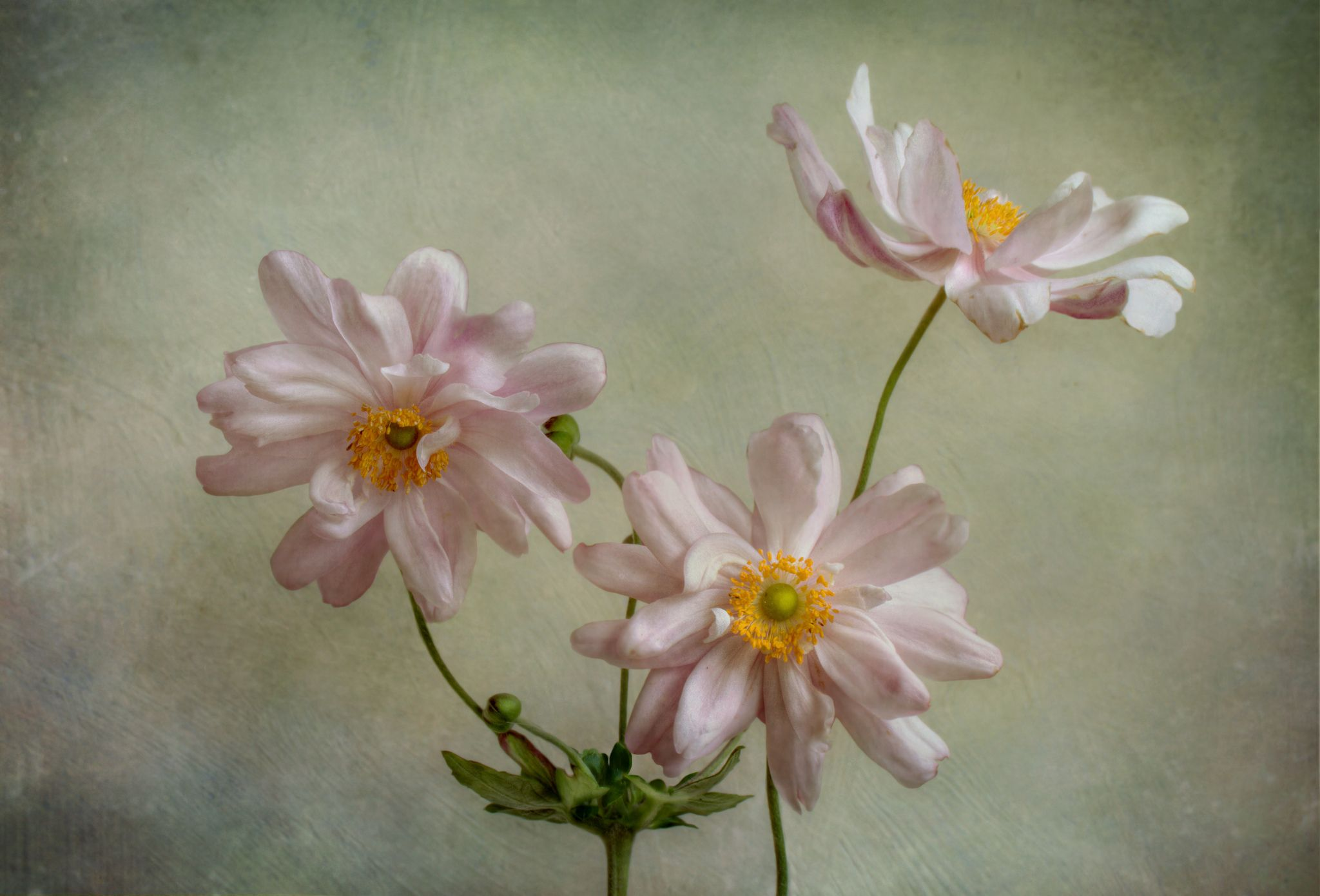 Explore Mandy Disher's photos on Flickr. Mandy Disher has uploaded 1282 photos to Flickr.