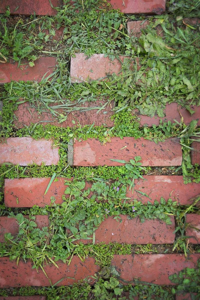 How to get rid of crabgrass lawn pinterest lawn and garden
