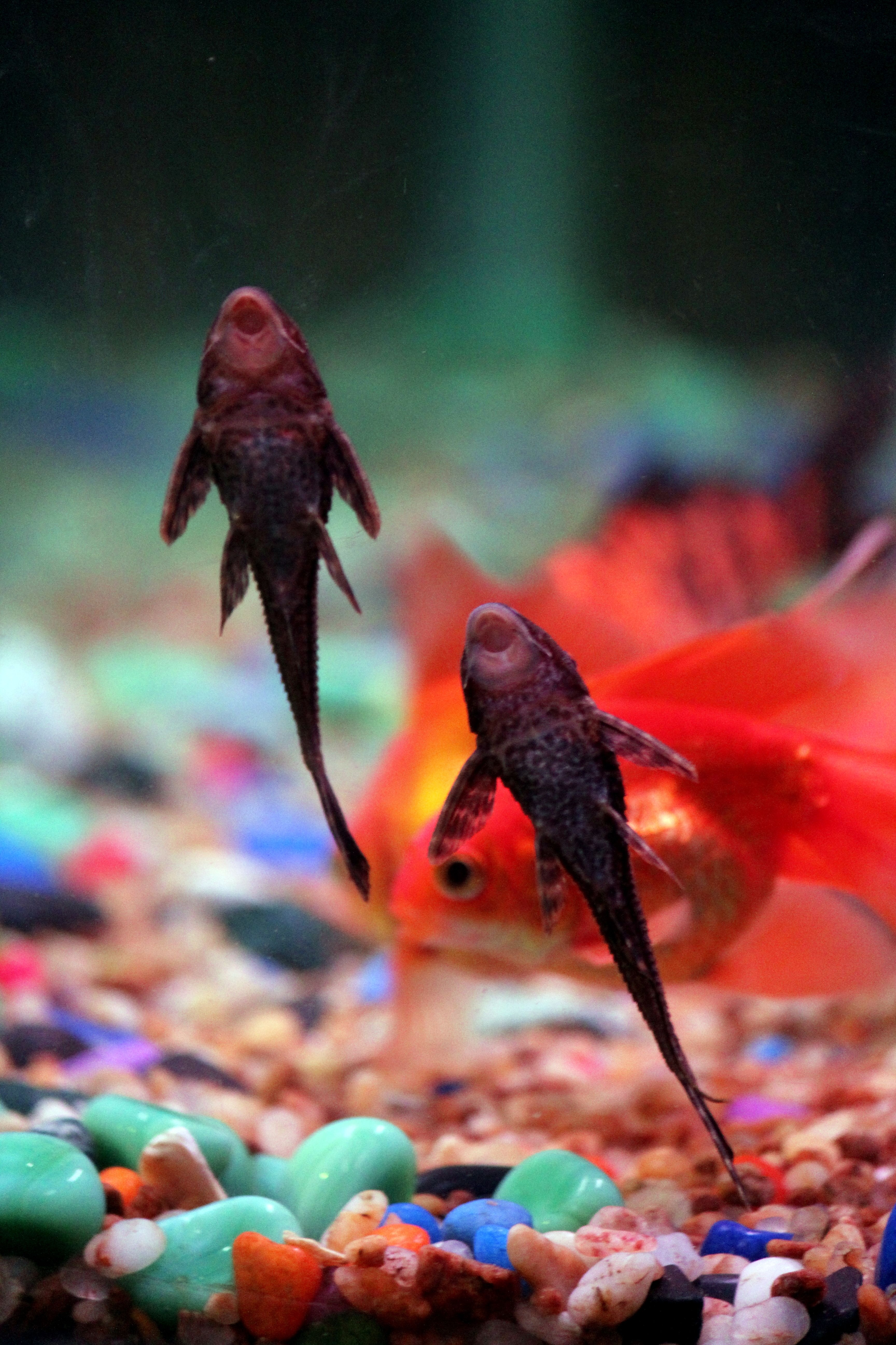 How To Set Up A Community Fish Tank: | For the Home | Pinterest ...