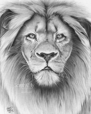 Sarah Kelly Beautiful Drawn Piece That Inspires Nature And Animal Drawings In Me Lion Head Tattoos Lion Sketch Lion Tattoo Design