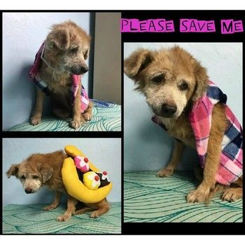 15 Year Old Tripod Terrier Don T Deny This Dog A Home Out Of Crowded Shelter Dogs Pet Adoption Dog Adoption
