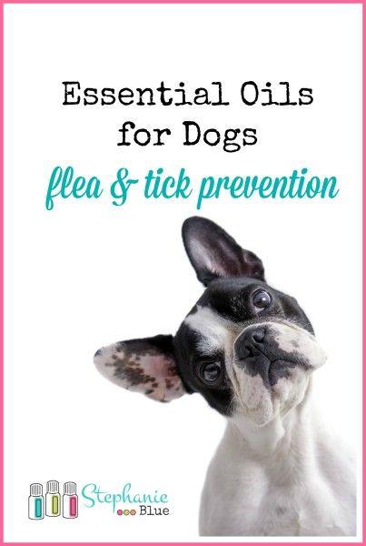 essential oils for dogs flea prevention vous le saviez pinterest chien animaux et bien. Black Bedroom Furniture Sets. Home Design Ideas