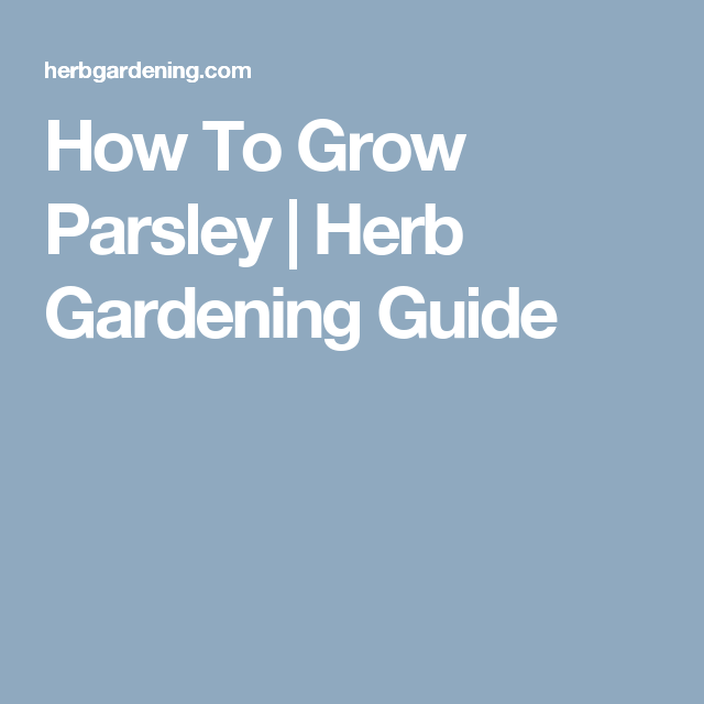 How To Grow Parsley | Herb Gardening Guide