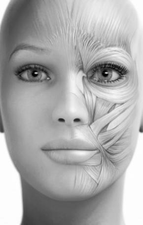 Beauty And Health Science Budowa Miesni Mimicznych Twarzy Czyli