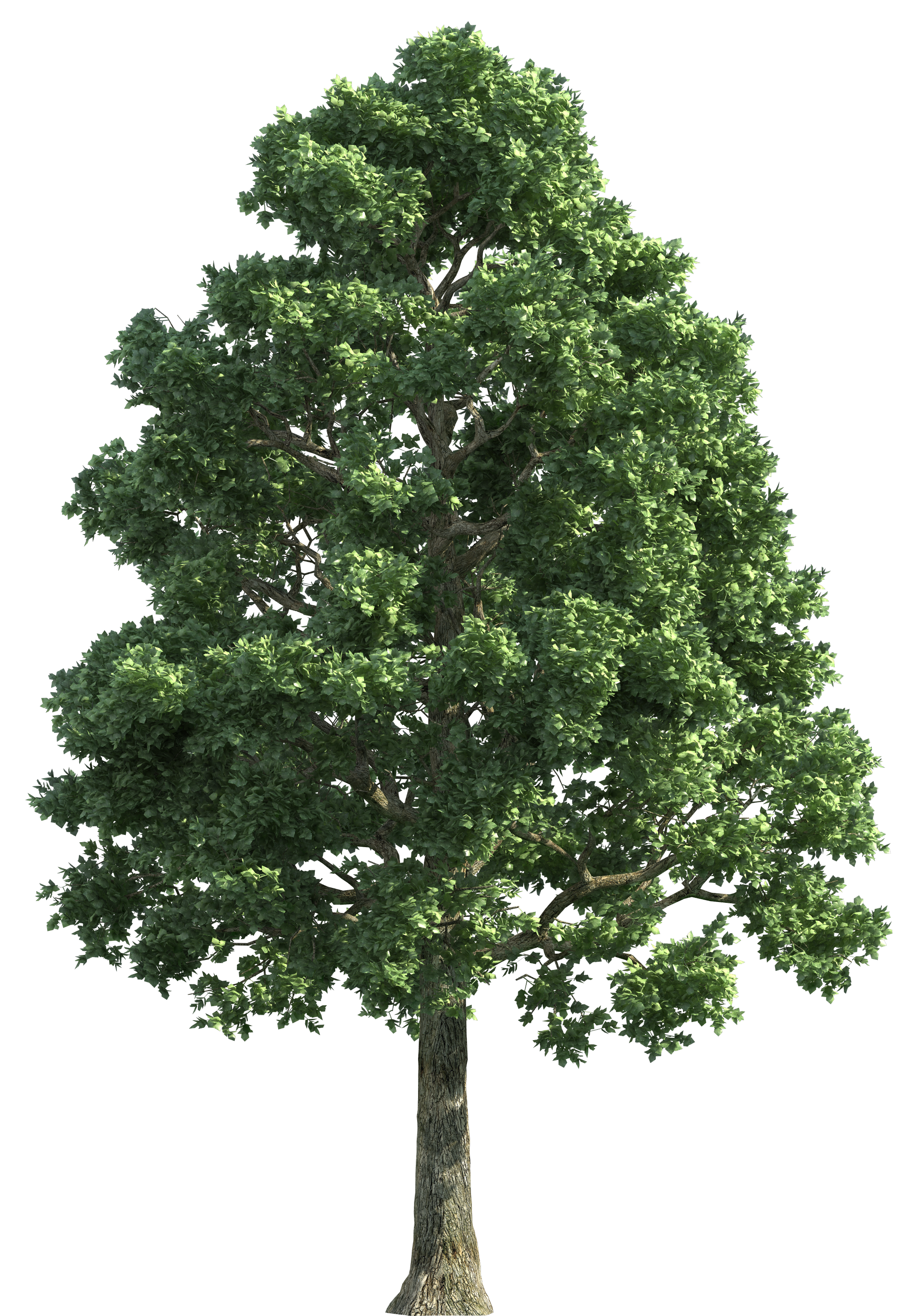 Image result for trees png Tree textures, Tree painting