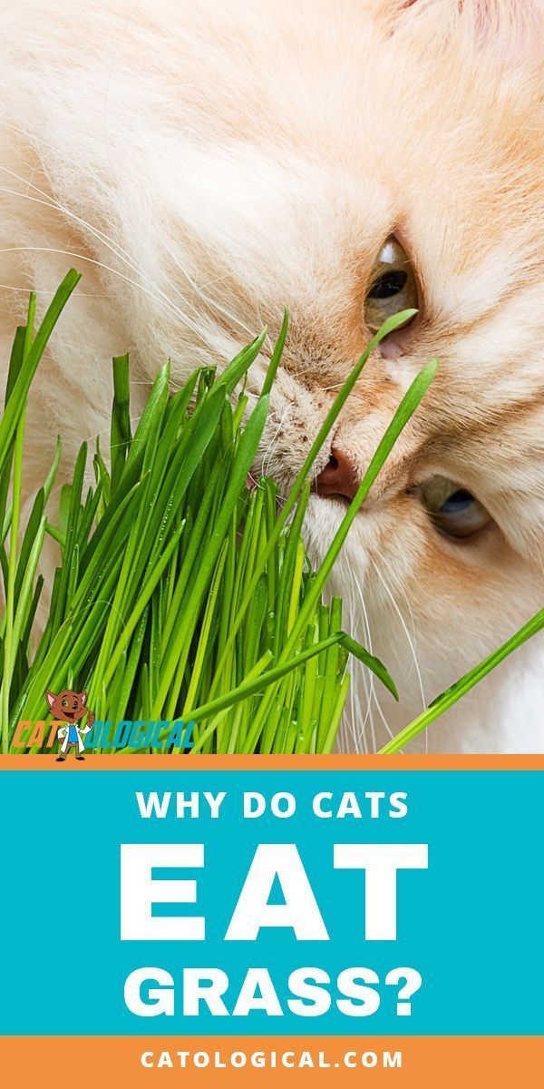 Why Do Cats Eat Grass? What Does It Mean and Is It Healthy