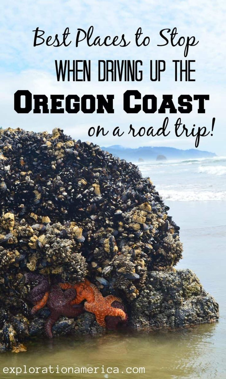 Best Places to Stop when Driving Up the Oregon Coast on a Road Trip #oregoncoast