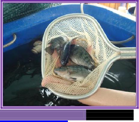 A Sample Tilapia Fish Farm Business Plan Template